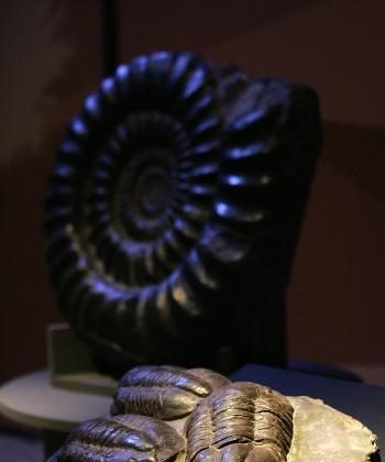 Fossils of three trilobites from Morocco on display in the exhibition 'America Migrante' (Migrant America) during the Universal Forum of Cultures Monterrey 2007, in Monterrey, Mexico, in October 2007. (Alejandro Acosta/AFP/Getty Images)