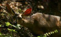 Deer Causing Environmental Change on Canadian Islands