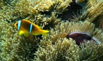 Ancient Coral Ecosystems Prove Resilient