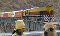 Notes on the Peruvian Llama