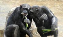 Chimpanzees Know How to Play Fair