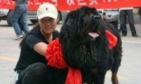 Tibetan Mastiff Worth $600,000 in China