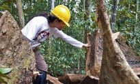 Man Opposing Illegal Logging in Amazon Murdered by Loggers