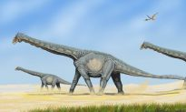 Did Dinosaur Methane Emissions Warm Mesozoic Earth?