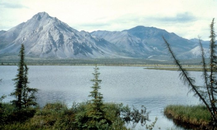 This undated photo shows the Arctic National Wildlife Refuge in Alaska. The federal government has assembled an interagency task force to develop an ecomanagement plan for the Alaskan arctic region. (U.S. Fish and Wildlife Service/Getty Images)