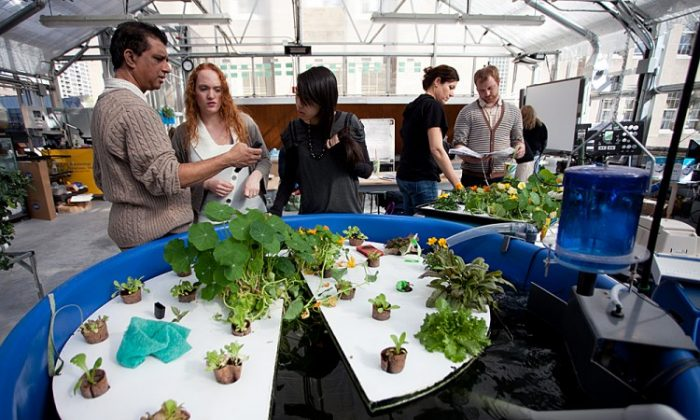 Teachers test the Ph level of the aquaponics system in the greenhouse classroom at PS333 in Manhattan before their Waste Water and Energy training on Monday. (Amal Chen/The Epoch Times)