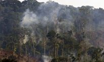 Indigenous People Farmed the Amazon Without Fire