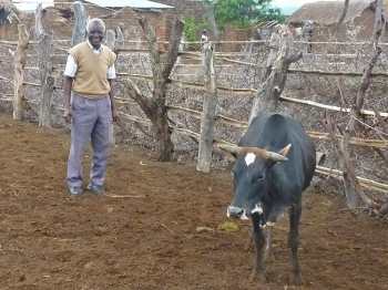 MILK FOR A VILLAGE: Abel Thomas  Simwaba smiles next to his cow in a rural village in Tanzania. The cow, which will soon have a calf, was given to Babu by a reader of The Epoch Times in San Francisco, Calif. Babu says he plans to share the calf and cow's milk with others in the village.  (Ondrej Horecky/The Epoch Times)