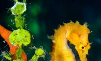 SCIENCE IN PICS: Thorny Babies Onboard