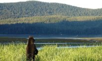 Native Tribes in Southeast Alaska Await Owed Land