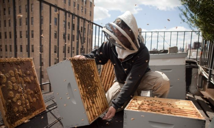 A hands-on NYC Beekeeping training session. (Courtesy of New York City Beekeeping)