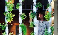 Windowfarms Brings Home-Grown Gardens to Big Cities