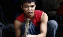 Thailand Seizes 600 Smuggled Cobras