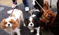 Dog Choice Reflects Your Personality, Study Says