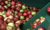 Old Fashioned Cider Mill A Treat to Visitors