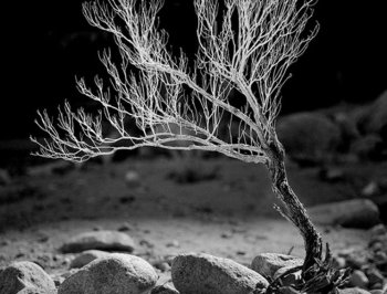 DEATH VALLEY: A desert bush in Death Valley National Park. (Courtesy of Ruben Reyes)