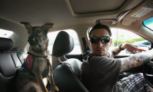 Service Dogs Aid Wounded Veterans (photo)