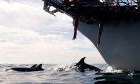 Sonar, Explosives Could Hurt More Marine Life: Study