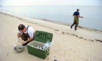 EPA Grants $10 Million for Beach Monitoring Systems