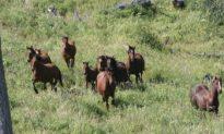 Legislate Protection for Alberta's Free-Roaming Horses, Says Group
