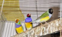 Head Color Linked With Personality in Social Bird Species