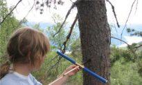 'Mummified' Pine Trees Found in Norway