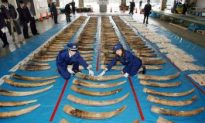 Ivory Stockpile Sale Rejected by U.N.
