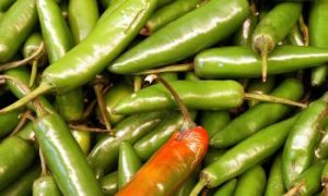 FDA Finds Salmonella in Jalapenos