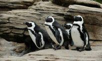 New York Aquarium Set to Reopen in Spring