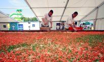 Polish Chefs Create World's Largest Lasagna