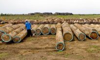 Illegal Logging Threatens Liberia's Forests