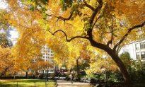 Mid-Autumn in Madison Square