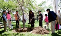 First Lady Plants New Tree at Cherry Blossom Festival