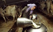 CDC Says Raw Milk Causes Most Dairy-Related Illnesses