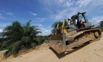 Palm Oil Plantations Clearing Borneo's Carbon-Rich Forests