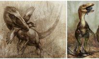 Flightless Raptor Ate Flying Dinosaurs