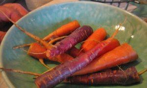 Organic Plant Breeding Yields Healthy Diversity