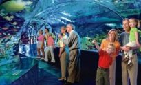 Construction Gets Underway for Ripley's Aquarium