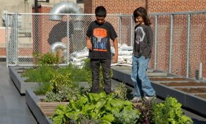 Gardens Add Life to a Growing Number of School Curriculums