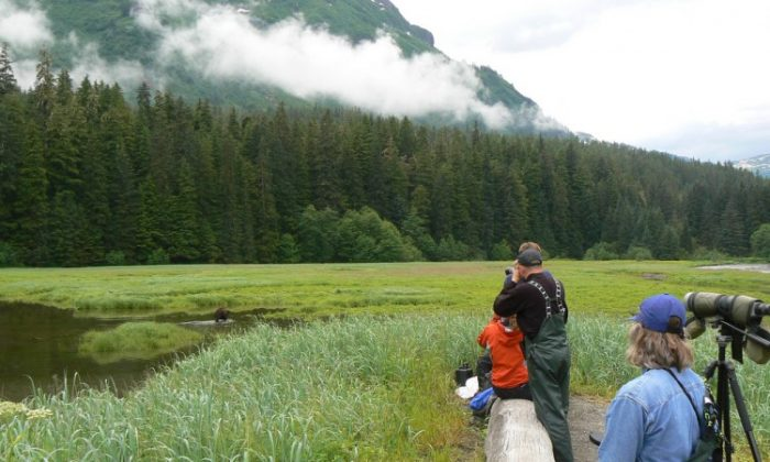 Visitors look at wildlife through binoculars in the Tongass National Forest on July 13, 2007. (Photo courtesy of the US Forest Service; Tongass National Forest photo library)