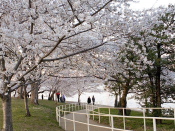 Japanese Ambassador Ichiro Fujisaki speaks at the opening ceremony of the 2011 Cherry Blossom Festival on March 26. (Lisa Fan/ Epoch Times)