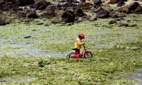 World's Seas Must Go on 'Pollution Diet,' Says Biologist