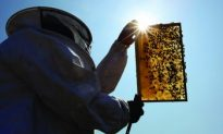 Honeybee Deaths Spur Diagnostic Research Centre