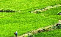 Bhutan Goes for 100 Percent Organic, Challenges Abound