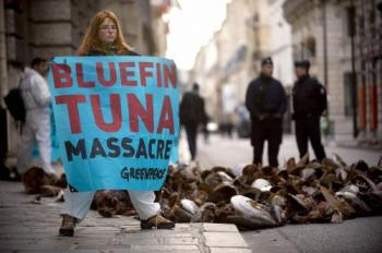 A Greenpeace activist holds a banner near tuna that the group dumped in front of French Ministry of Agriculture in Paris in November. The group called for a ban on tuna fishing and the protection of the species.  (Martin Bureau/AFP/Getty Images)