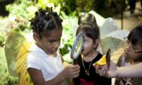 Butterfly Exhibit Mesmerizes at Natural History Museum