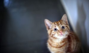Help a Kitty in Need, Add Some Cute to Your Home
