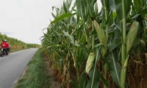 Green Fuels Could Damage Environment, Study Claims