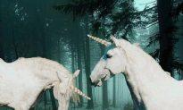 Unicorns as Magical Teachers