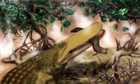 'Shieldcroc': The Prehistoric Crocodile With a Bump On Its Head